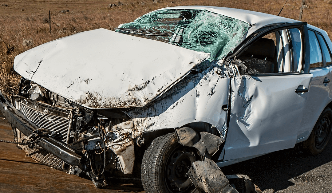 Get the Best Car Insurance in Florida – What To Do If An Animal Runs In Front of Your Car